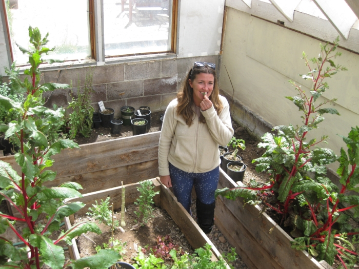 Ophir resident Jacey Depriest samples herbs grown in the town's greenhouse. Compost created by the town's new service will be used to supplement its greenhouse beds and town gardens. [Photo by Katie Klingsporn]