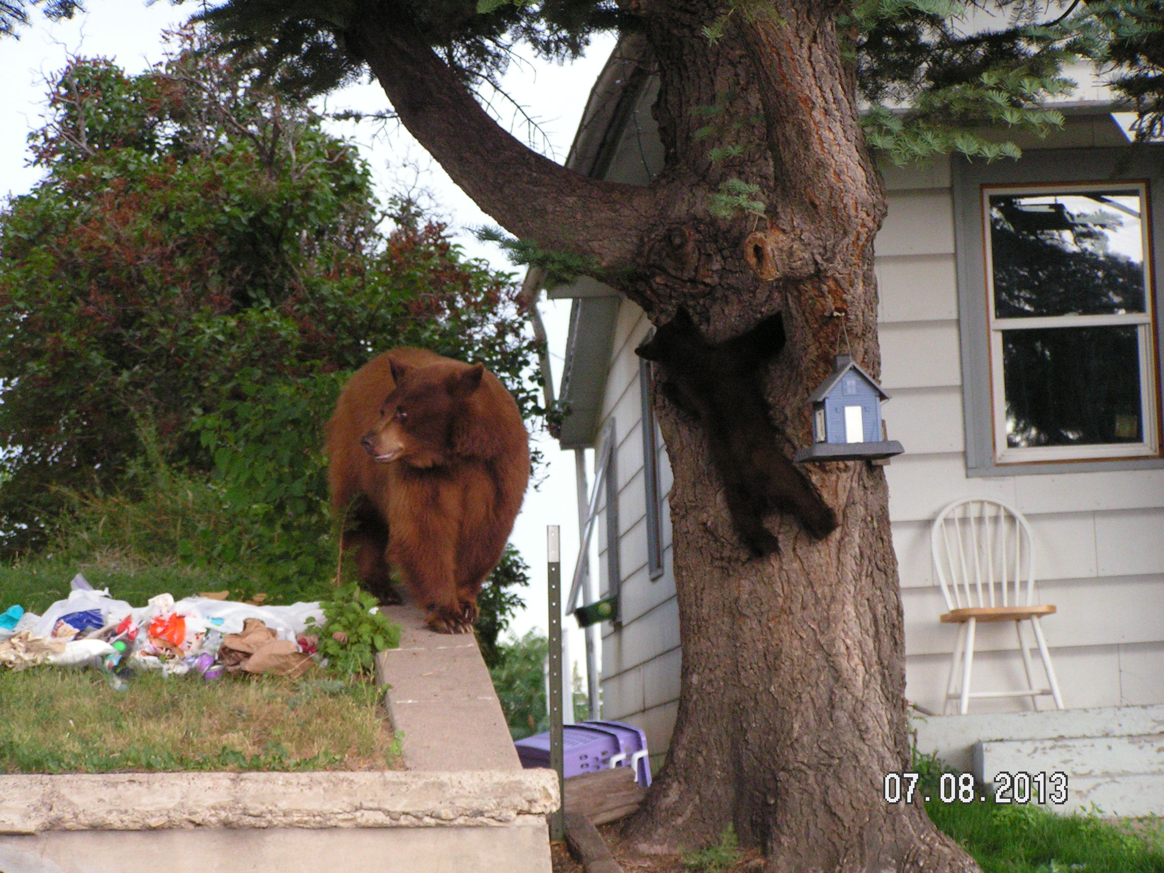 A bear and cub sort through trash near a home. [Photo courtesy of Colorado Parks & Wildlife]