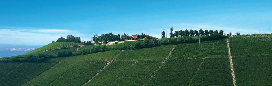 The varieties produced by the Rizzi farmhouse are:  Nebbiolo da Barbaresco, Barbera, Dolcetto, Chardonnay and Moscato.