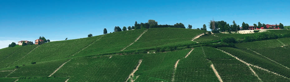 The varieties produced by the Boito farm are:  Nebbiolo for Barbaresco, Barbera, Dolcetto, Chardonnay and Freisa.