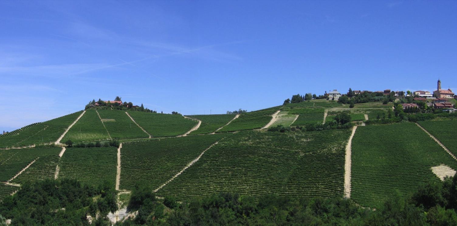 CRU NERVO - Inside it's found the Vineyard FONDETTA