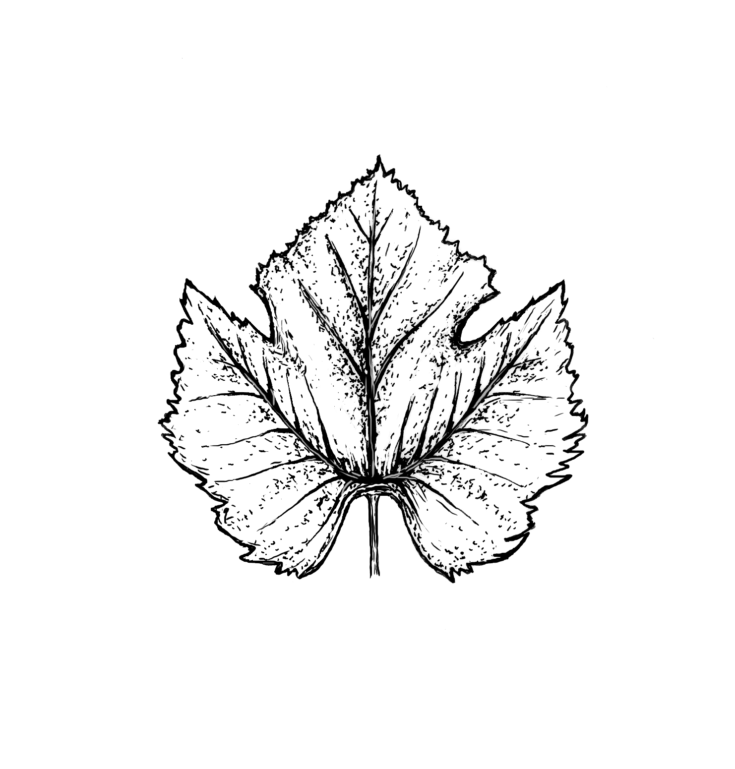 malbec-leaf.jpg