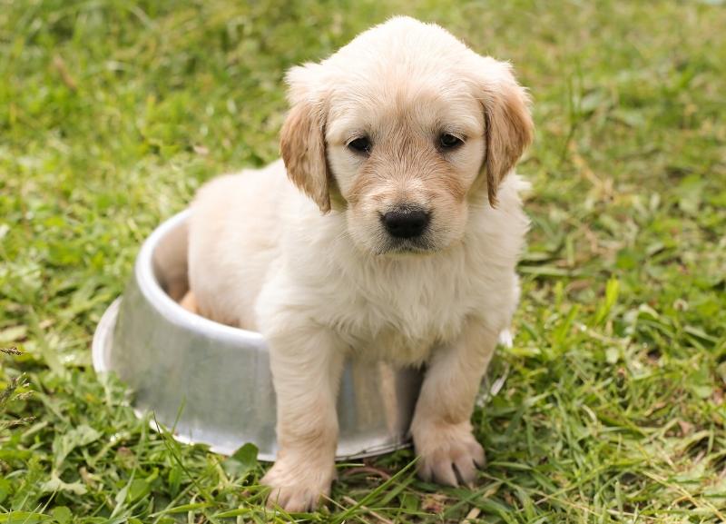 But you said 'use the dog bowl'