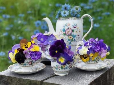 Tea and scones won't break these bones: Wildgoose Nursery