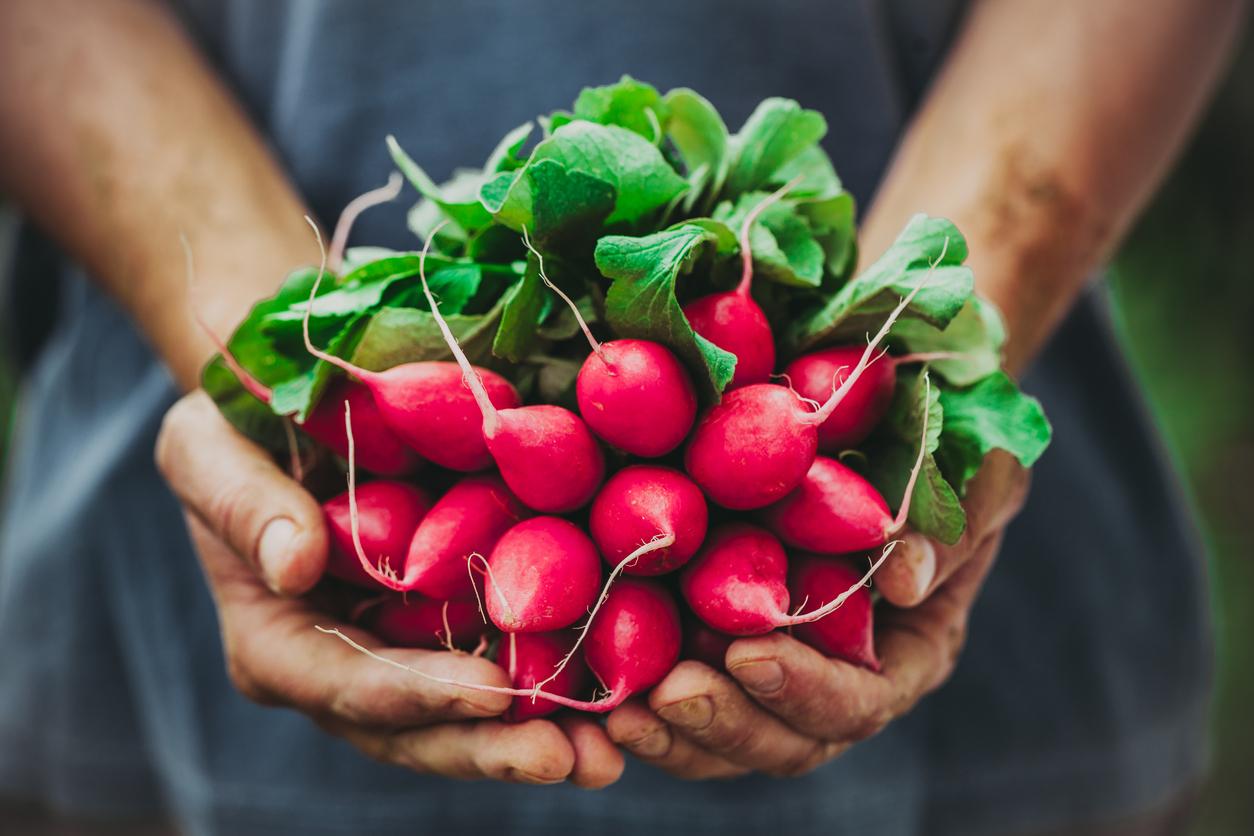 a bumper crop of homegrown radishes