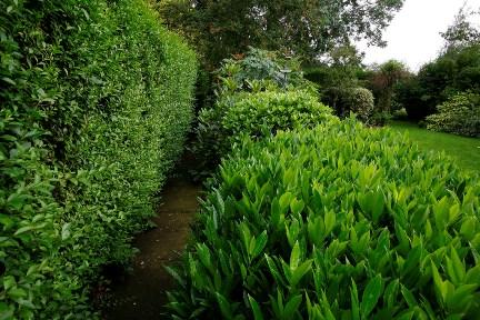 Top 5 evergreen shrubs by RHS