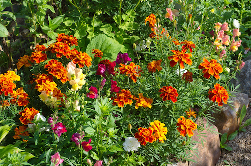 Add ribbons of colour in your garden