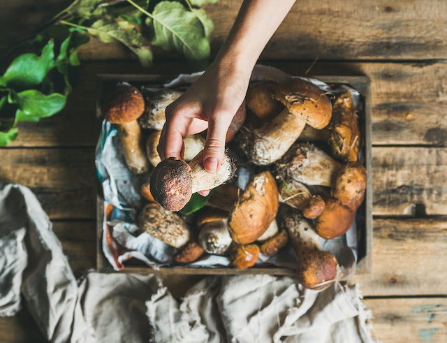 You need to know your fungi