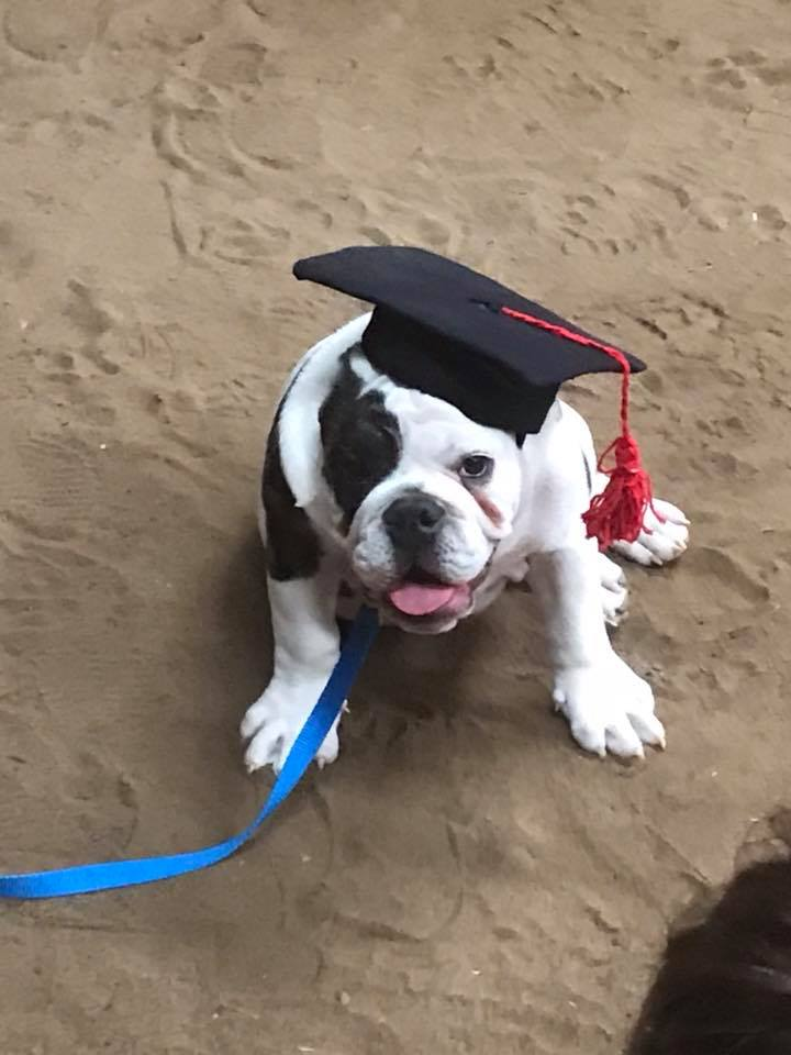 Tank puppy.jpg