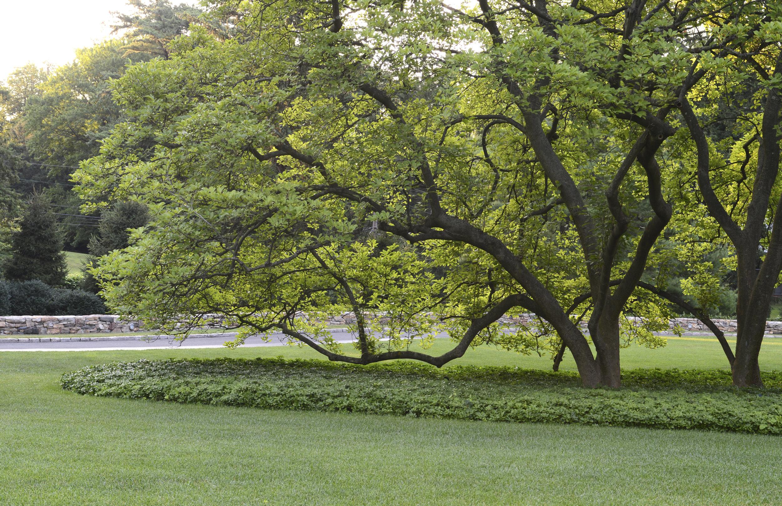 front tree506.jpg
