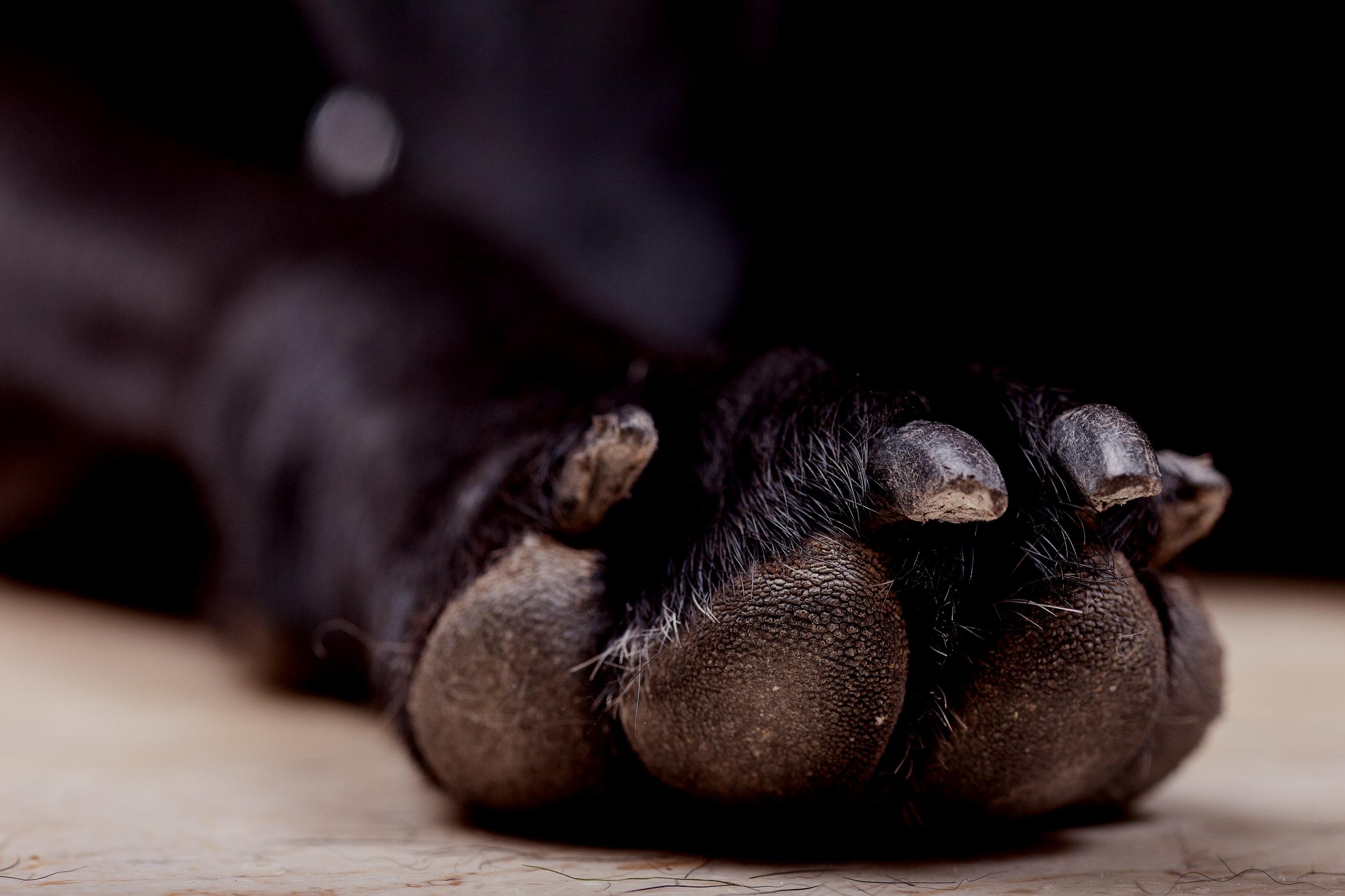 Training a dog to enjoy nail trims -