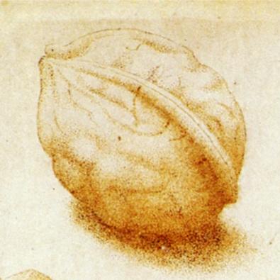 John_Dunstall_Walnuts_and_Hazelnuts_1666.jpg