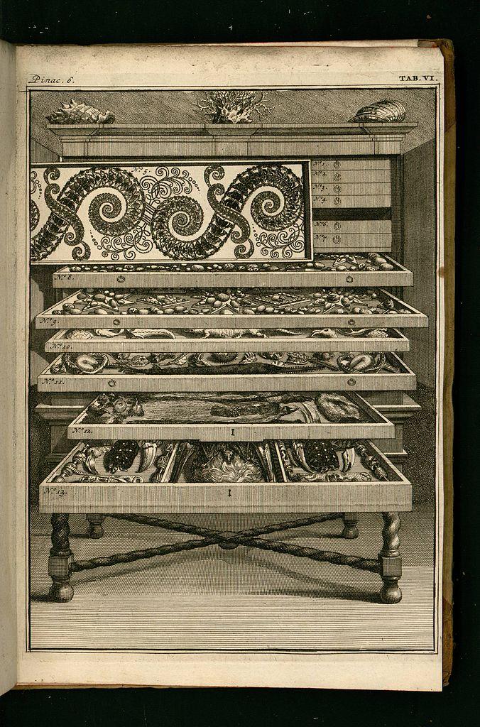 676px-Vincent,_Levinus_(1715)_Wondertooneel_der_natuur_-Tome_2-_0298.jpg