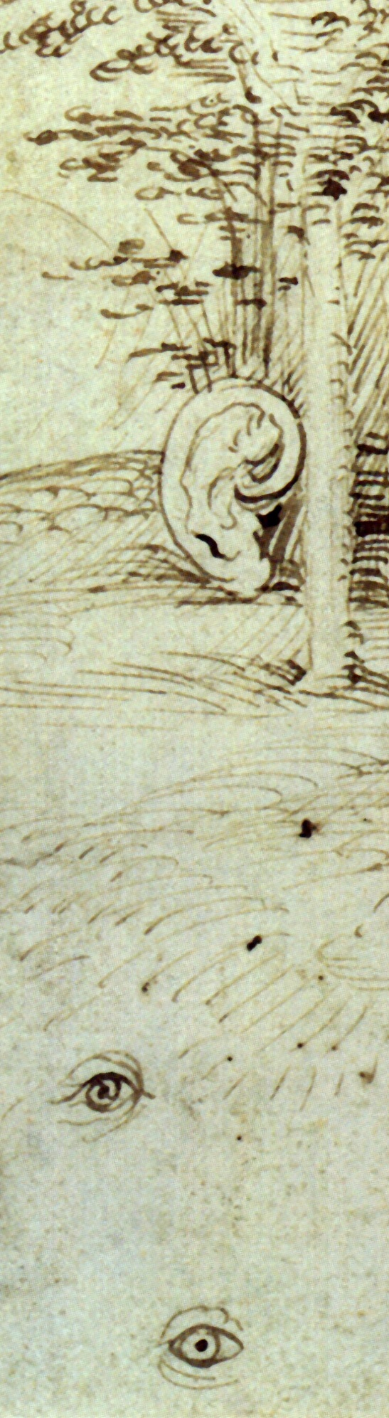 The_Trees_Have_Ears_and_the_Field_Has_Eyes_by_Hieronymus_Bosch.jpg