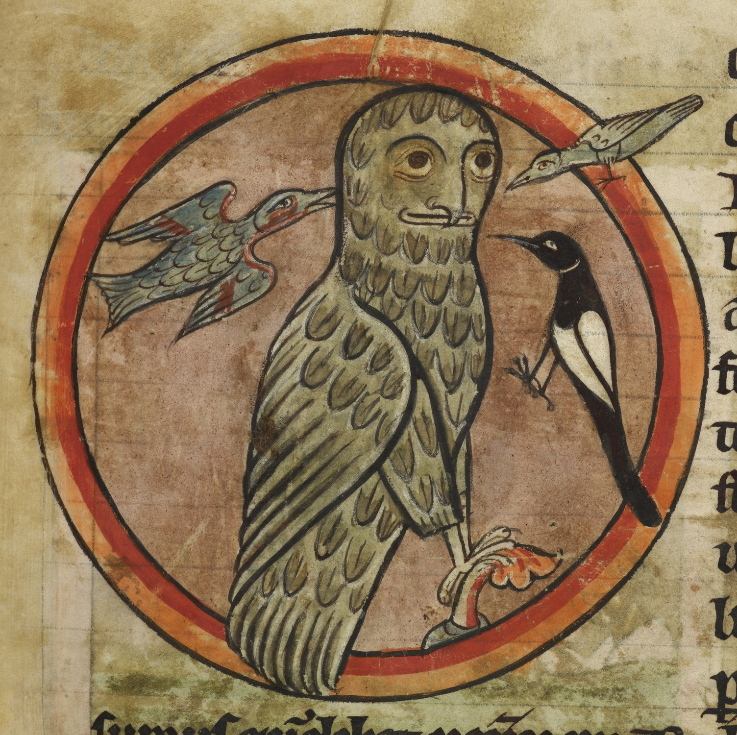 Owl_mobbed_by_smaller_birds_-_Bestiary_(1230-1240),_f.47_-_BL_Harley_MS_4751.jpg