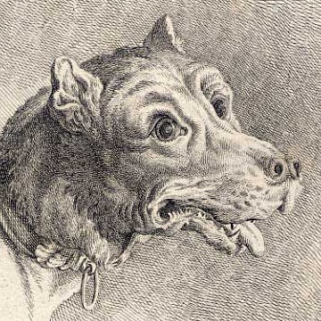 Anatomie_Studie_Ko%CC%88pfe_Hund_2_Ridinger.jpg