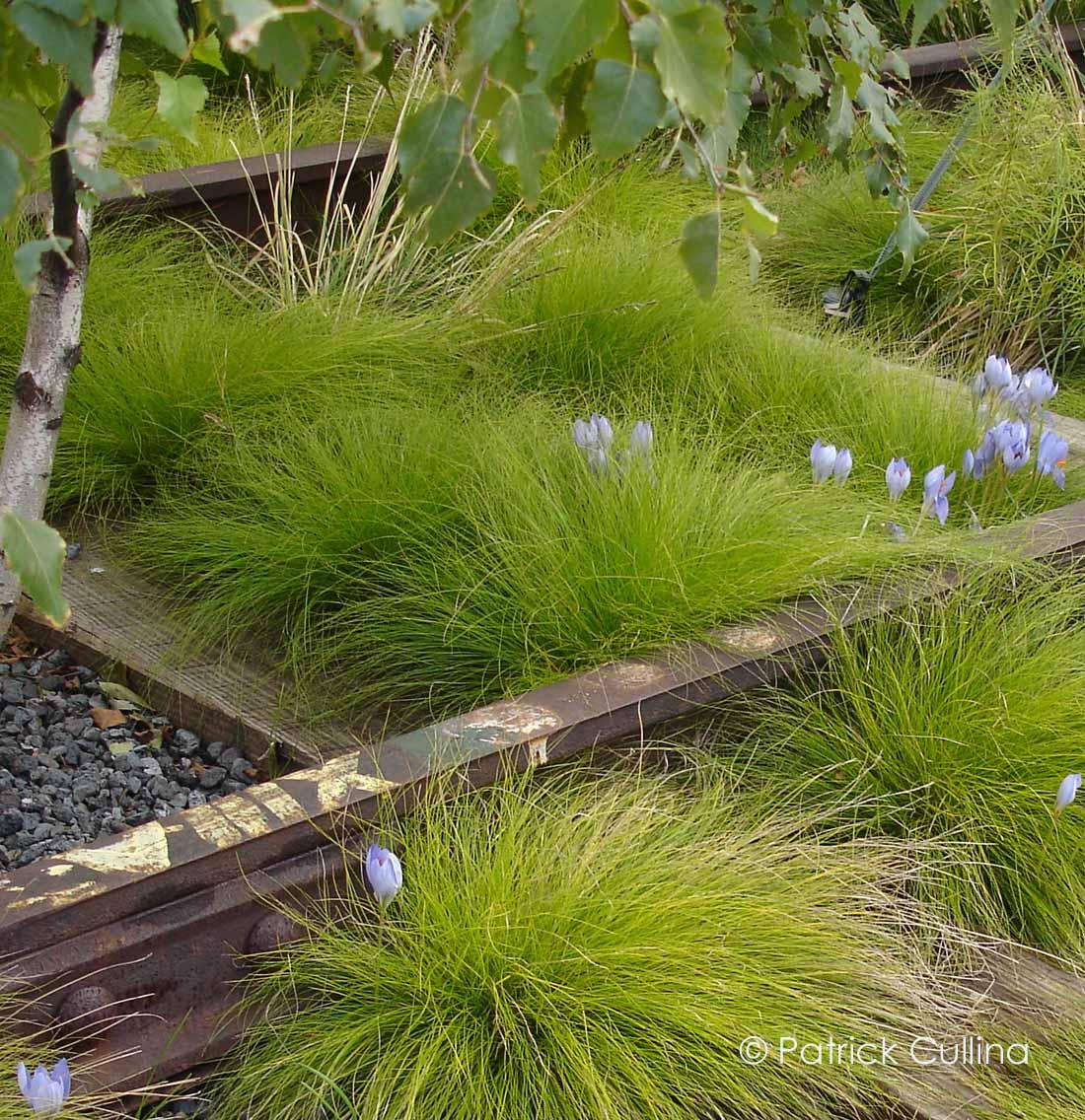 Carex_eburnea_01_Pat_Cullina_copy.jpg
