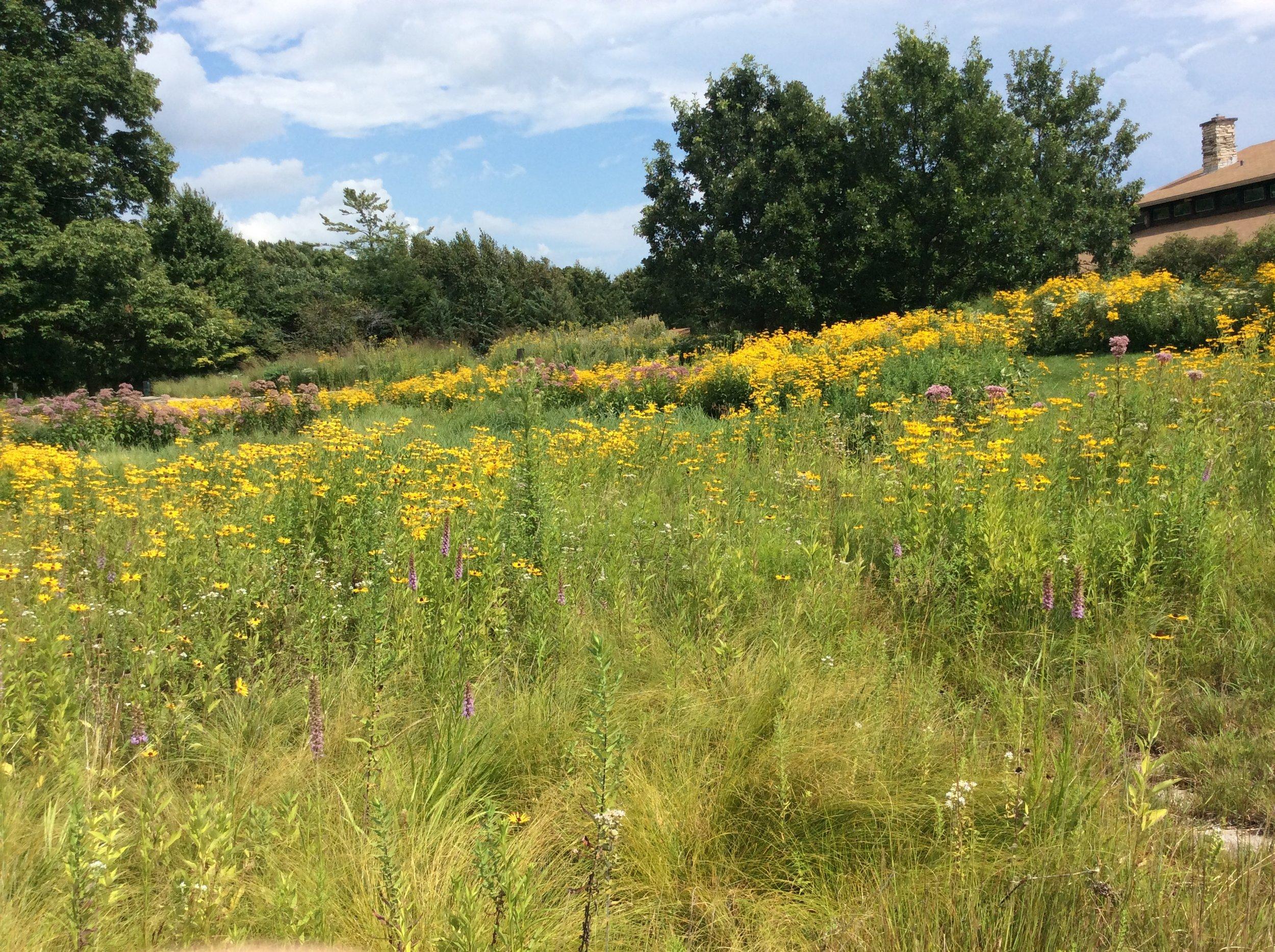 "A Darrel Morrison ""created"" landscape in Wisconsin"