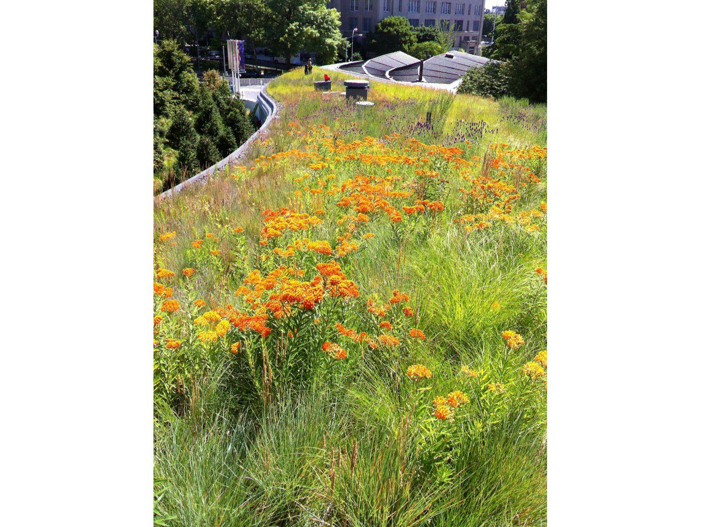 brooklyn_botanic_garden_vc7.jpg