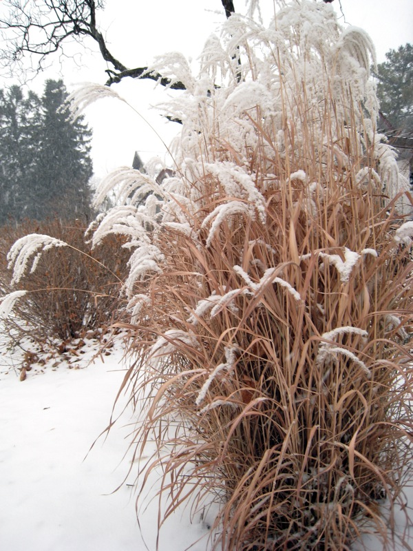 Winter-garden-design-ornamental-grass.jpg