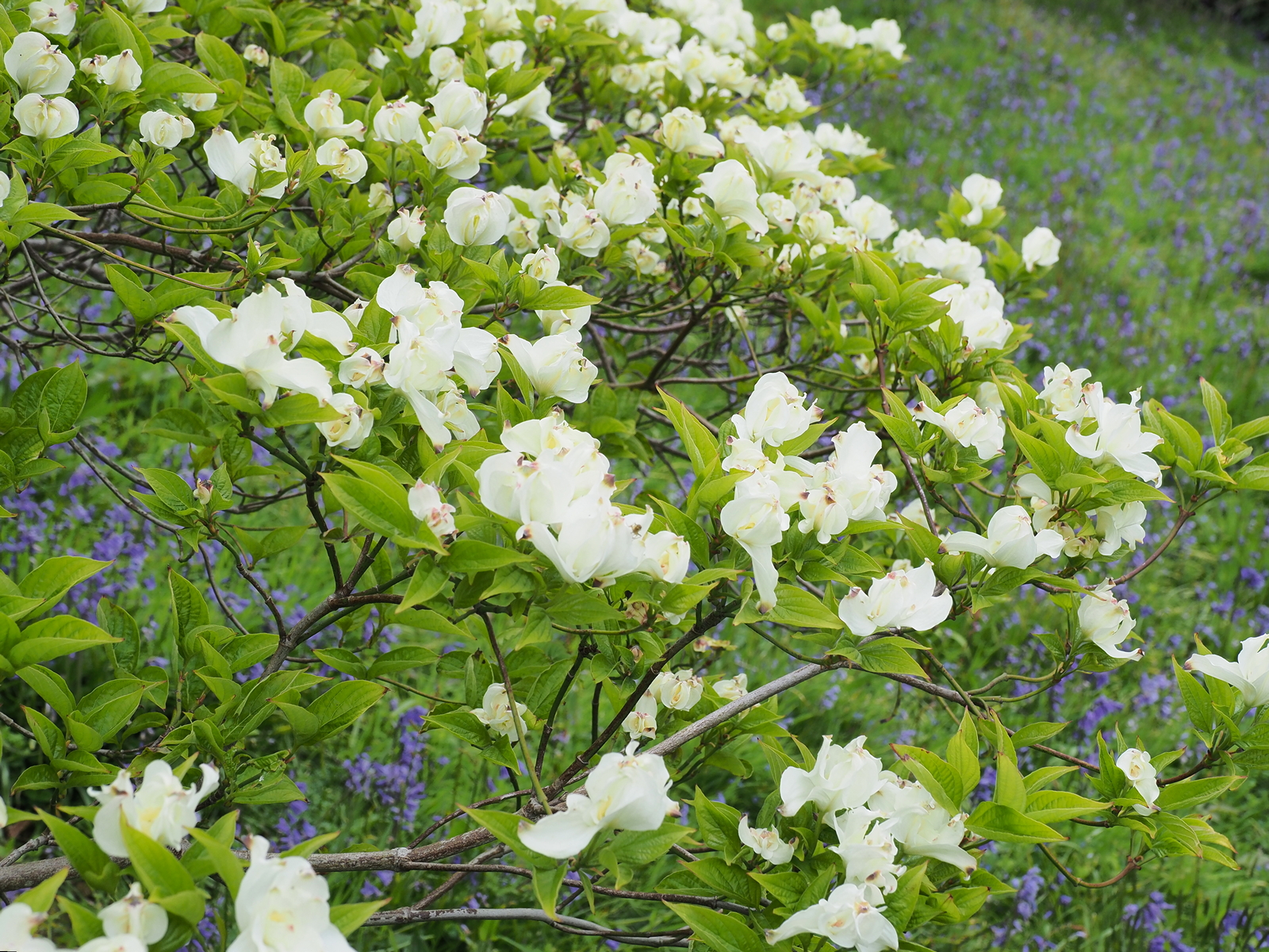 E_05_May_CORNUS_eternal_02.jpg