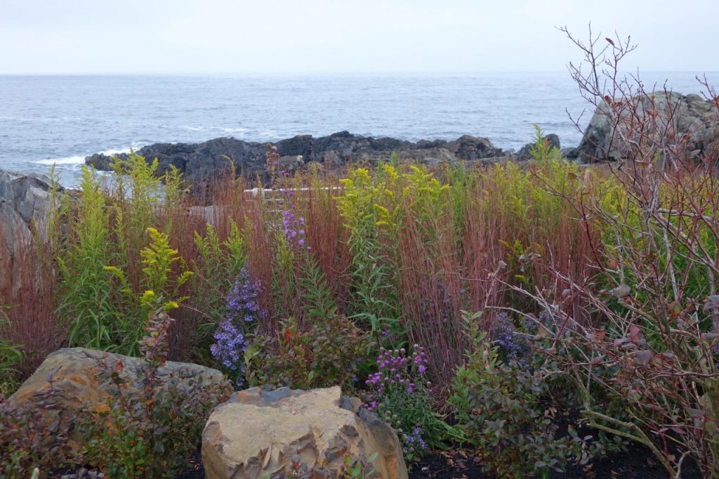 APLD Award-winning Maine Seaside Garden - not designed or installed by me but just how I would like some of my gardens to look in early fall - texture, color, flowers, pollinator-friendly, natural but not wild or weedy, fairly subdued tones