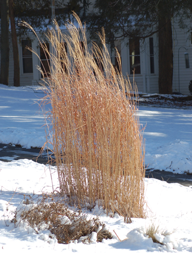 ornamental_grass_winter_big.jpg