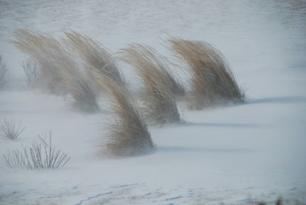winter_grasses_lg.jpg