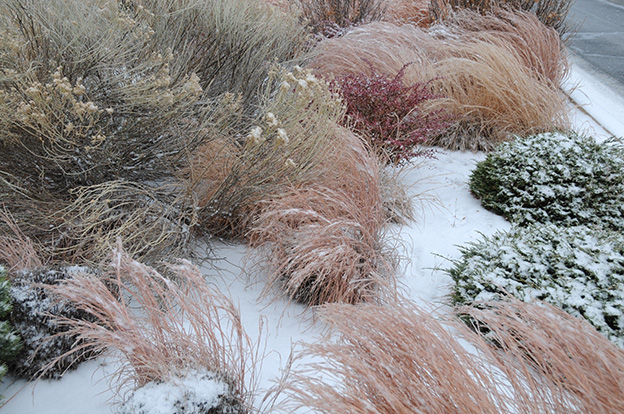 Ornamental-Grass.5.jpg