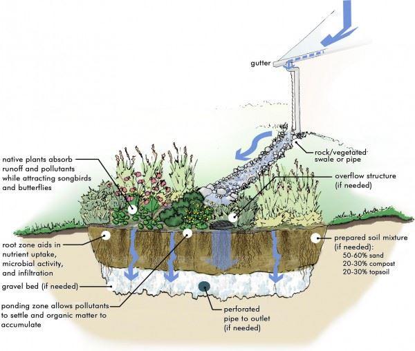 General elements of a rain garden