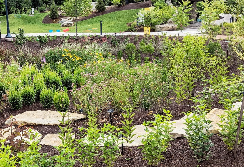 Rain Garden with path