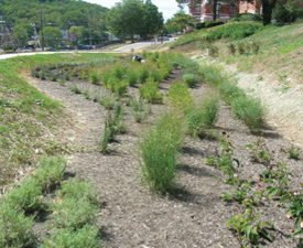 St Francis Rain Garden just after planting
