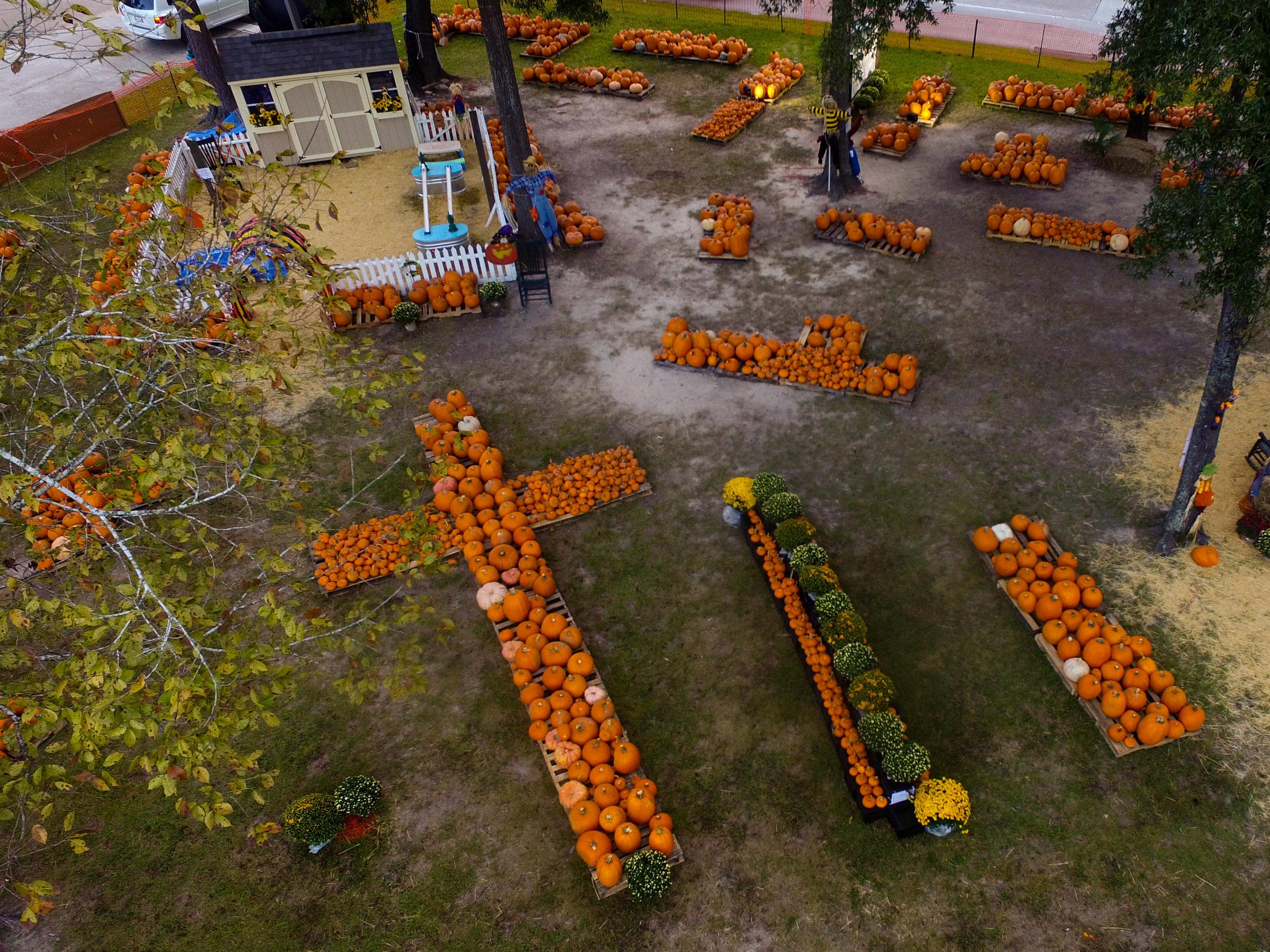 pumpkin' patch-0056.jpg