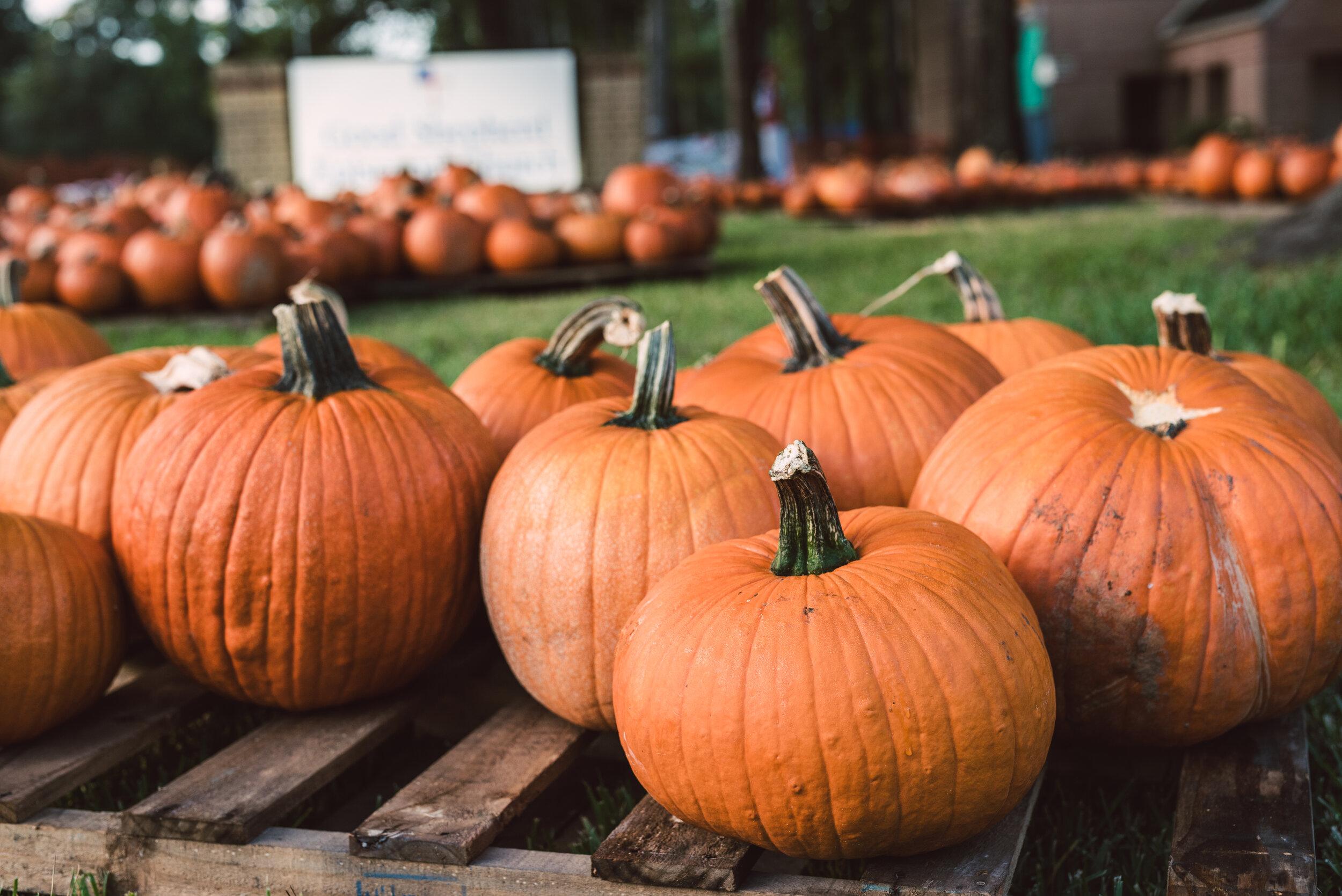 2019_Good Shepherd_Pumpkin Patch_SelectsDSC_4081.jpg