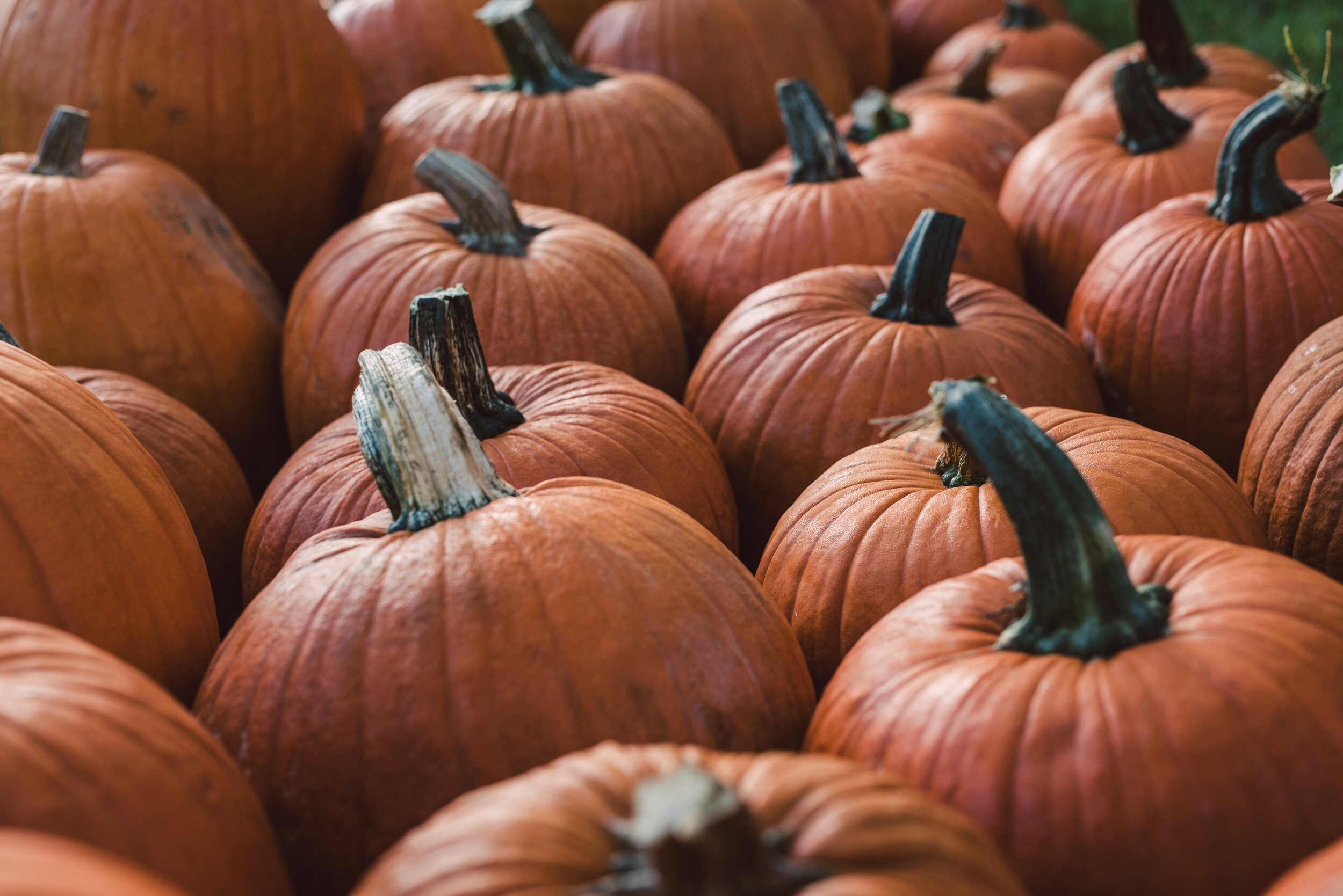 2019_Good Shepherd_Pumpkin Patch_SelectsDSC_4082.jpg