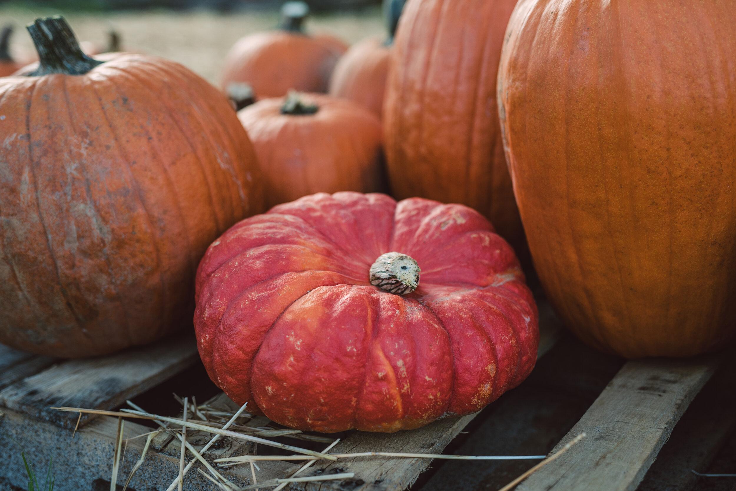 2019_Good Shepherd_Pumpkin Patch_SelectsDSC_4092.jpg
