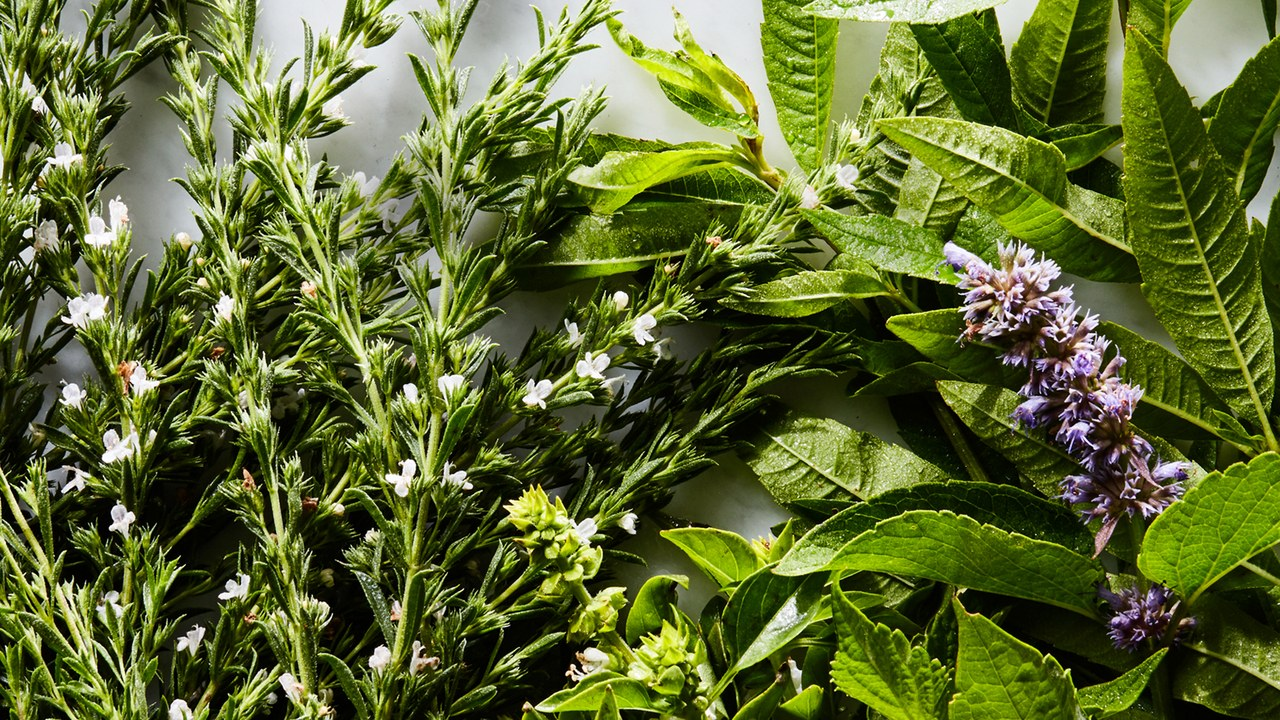 Herbs - Click here to look at our herb seed selection