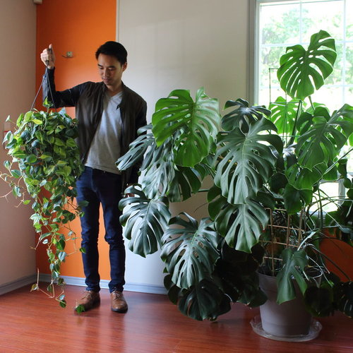Darryl Cheng from House Plant Journal taking care of his plant babies.