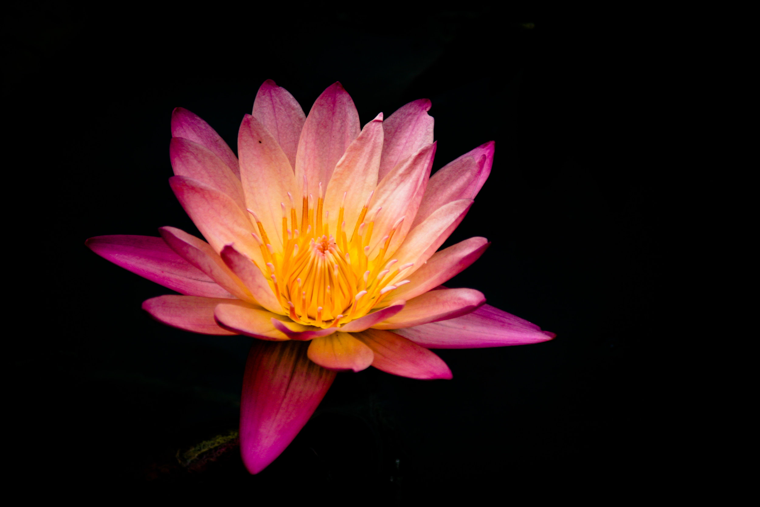 My First Reiki experience. -