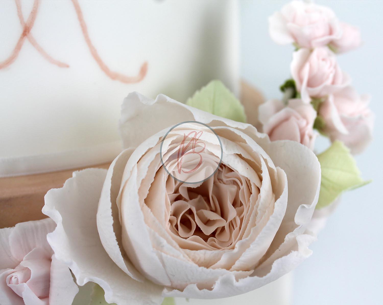 Blush Garden Rose Detail 1