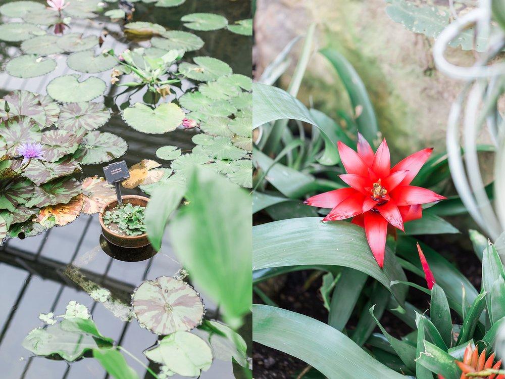 photos-kew-gardens.jpg