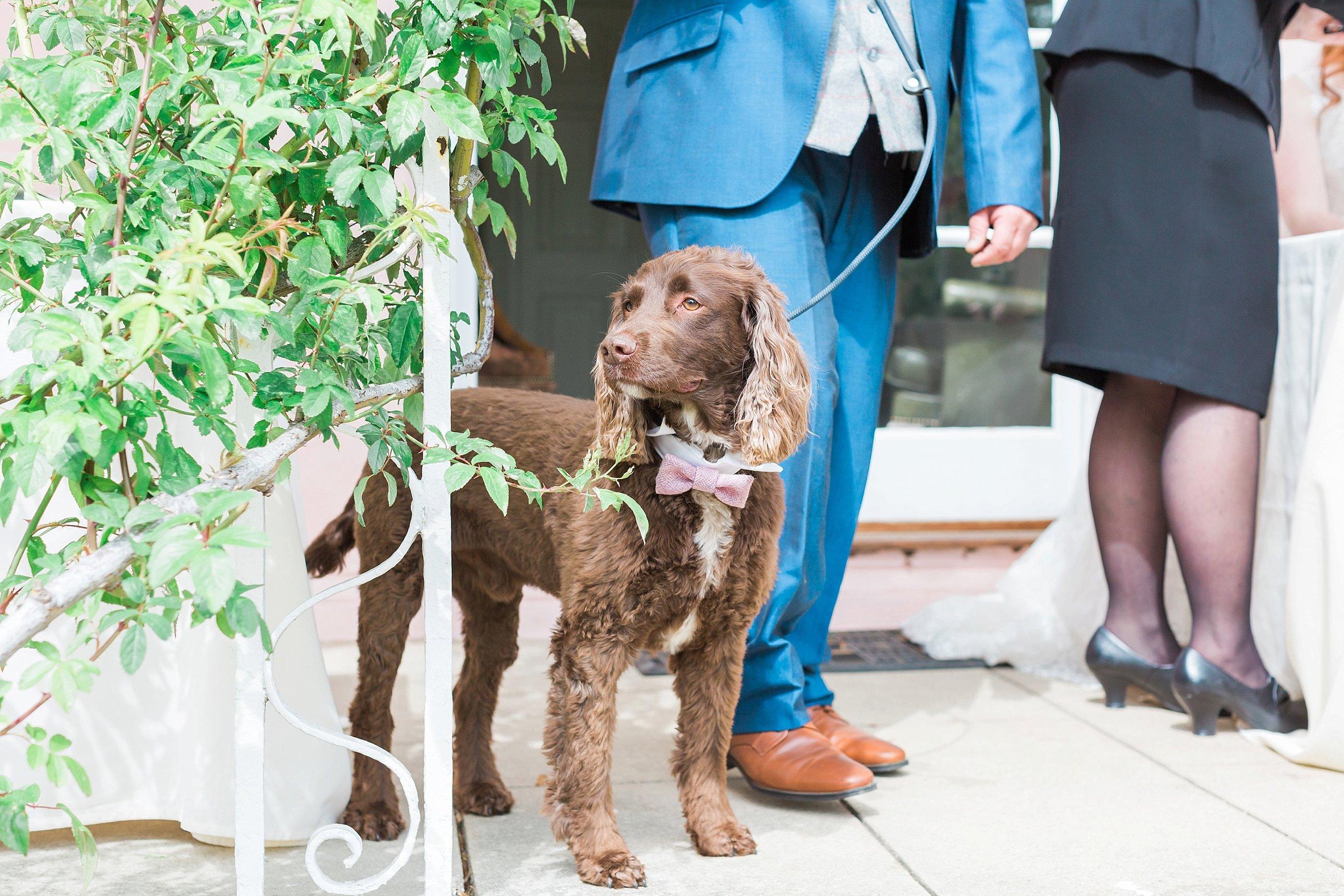 dog of honour.jpg