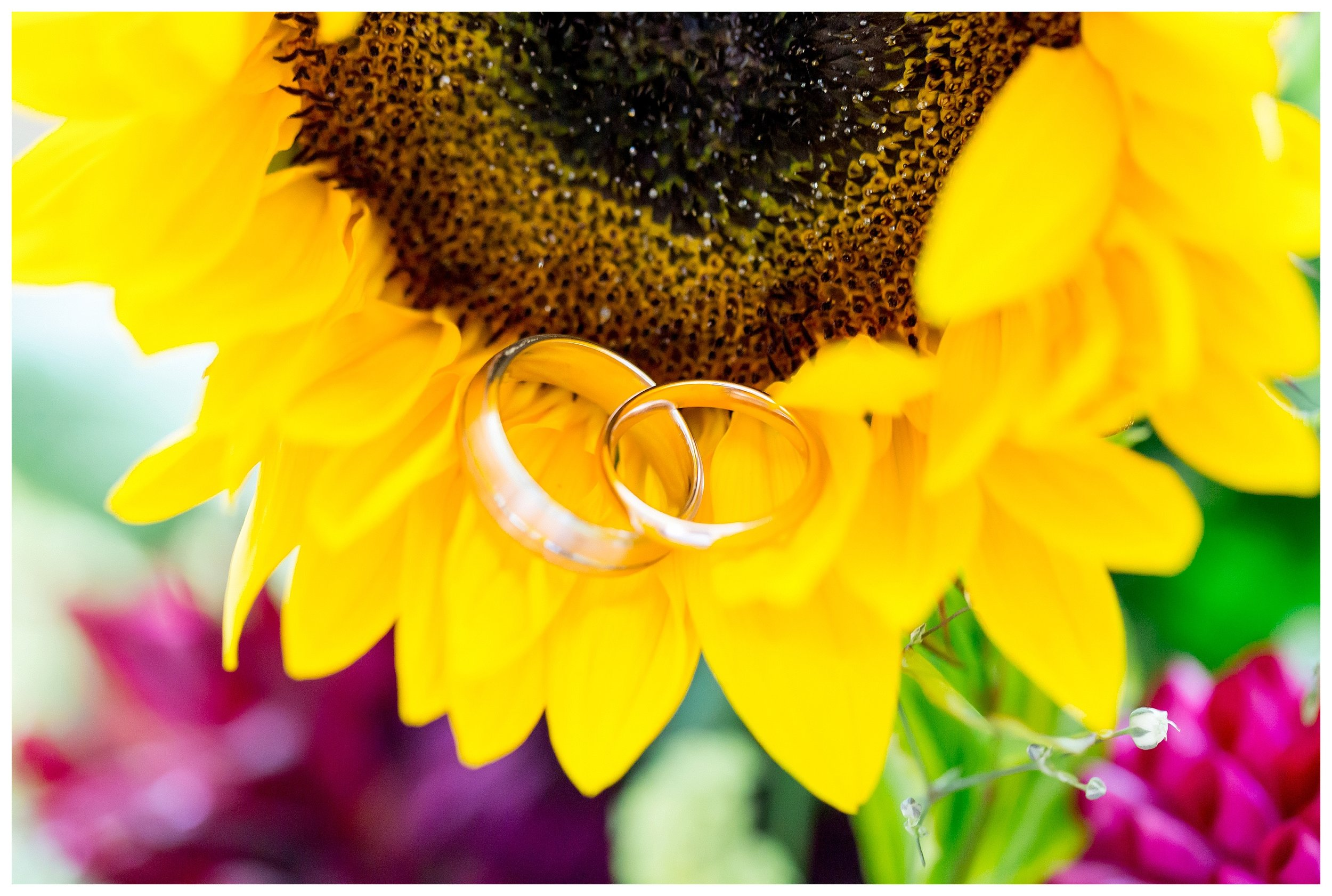 weddingringssomerset.jpg