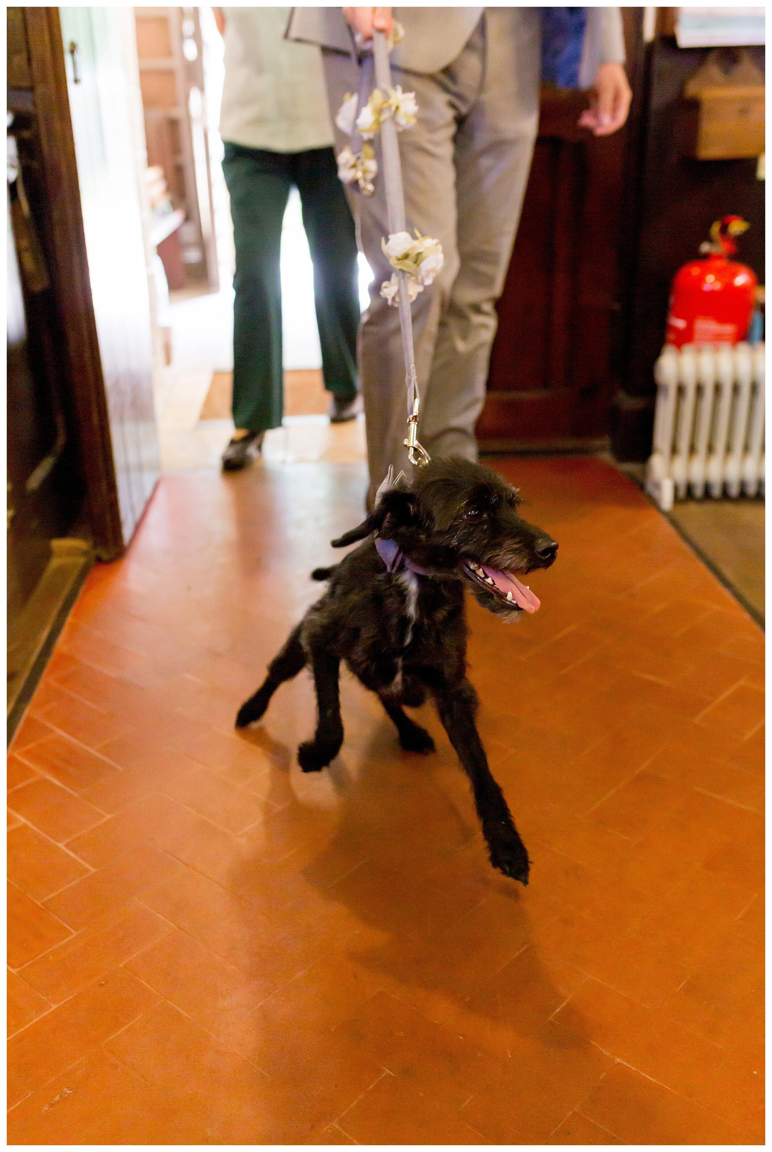 dog at your wedding.jpg
