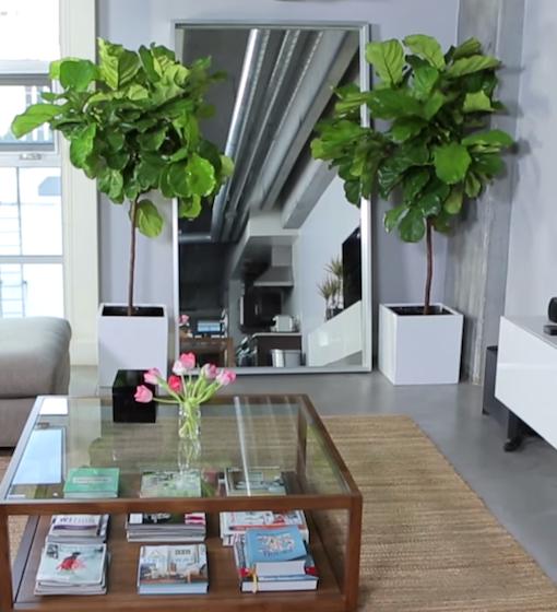 living-room-plants.png