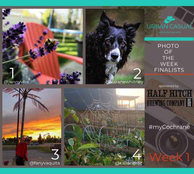 And the PHOTO OF THE WEEK finalists are: - 1/ @jennyvics - Bumblebee2/ @suzanewhitney - Almost looks like a painting!3/ @fanyvaquita - That sky, set off by the palm tree!;)4/ @callandrac - Early Morning Spiderweb