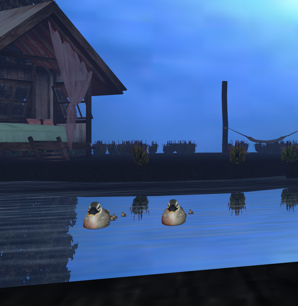 Ducks swimming in the lake as you chat