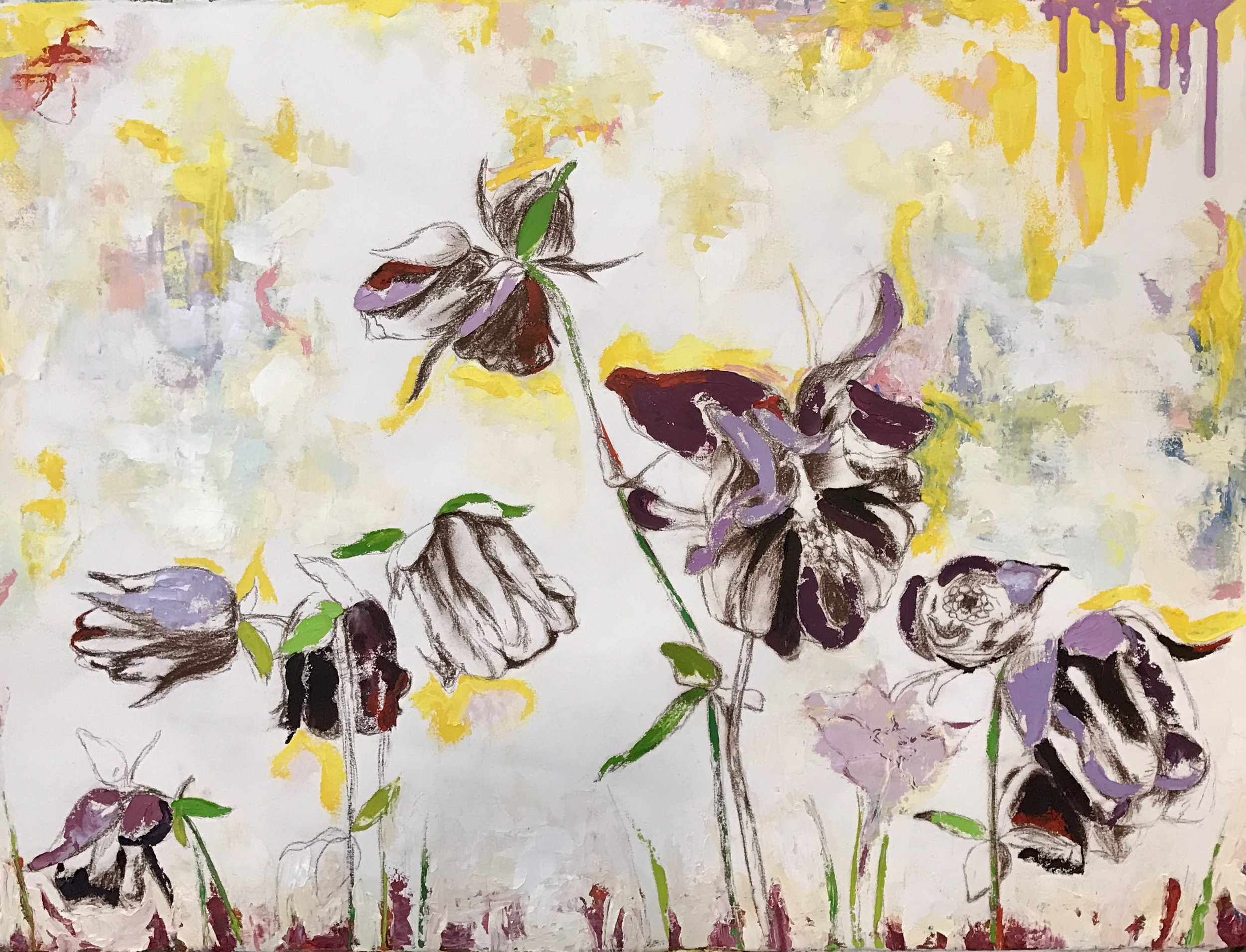 Collection of Columbines
