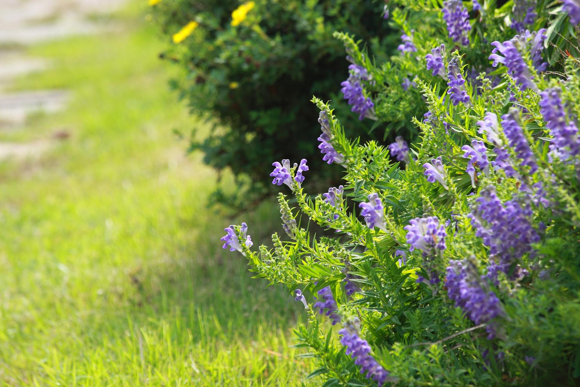 flowers-3241264_1920.jpg