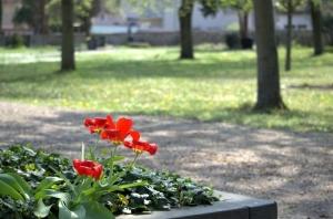 garden-3231688_1920.jpg